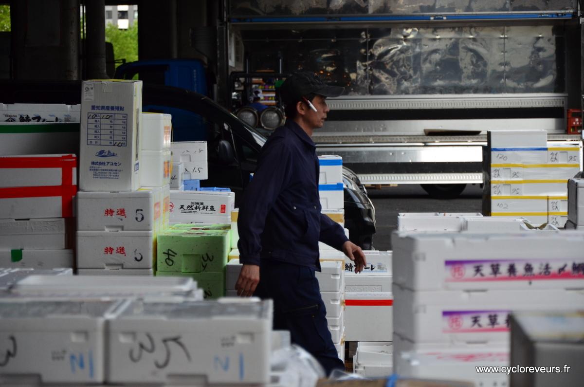 Les poissons pré-découpés sont chargés dans les camions : la marché en est inondé !