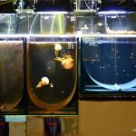 Manège tournant pour méduses