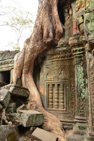 Un petit détour pour que les bas relierfs soient bien visibles : sympa l'arbre !