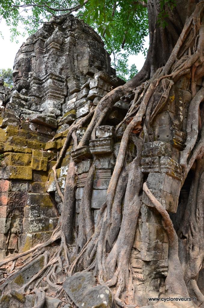 Pluie de racines