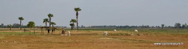Paysage du Cambodge Sud