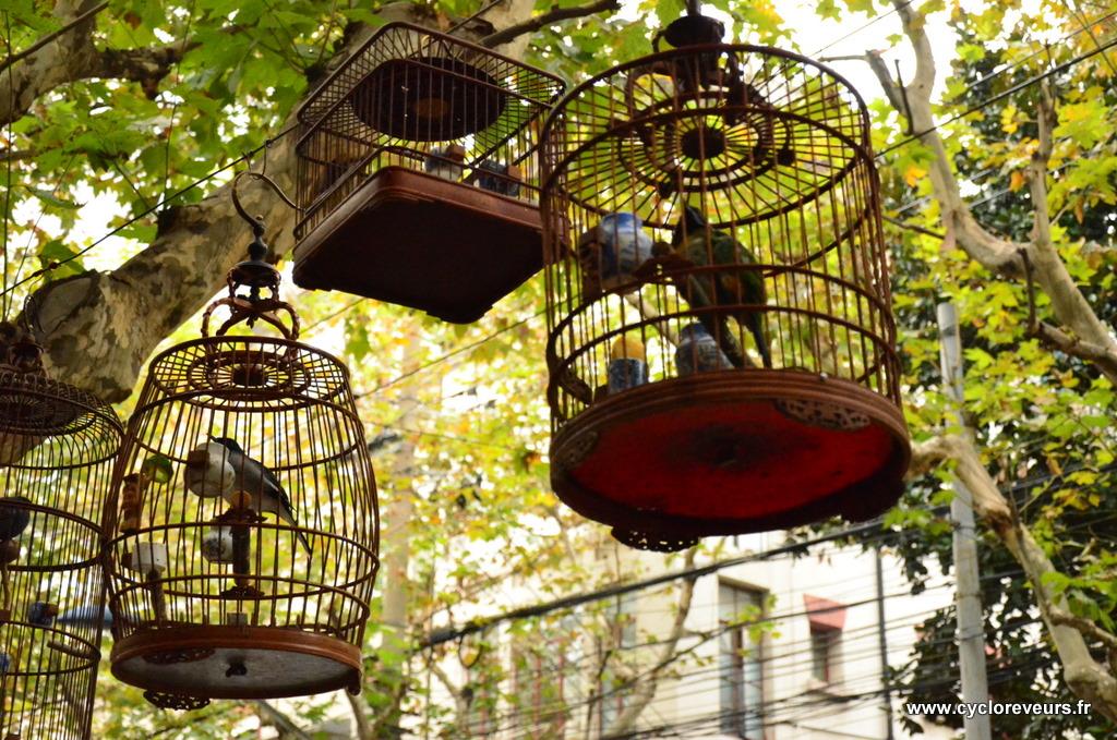Les oiseaux, dans leurs cages parfaites, avec petits déversoirs en céramique bleue et blanche, de quoi égayer les rues de Shanghai, mais on les trouve aussi dans la partie du Yunnan que nous avons traversée