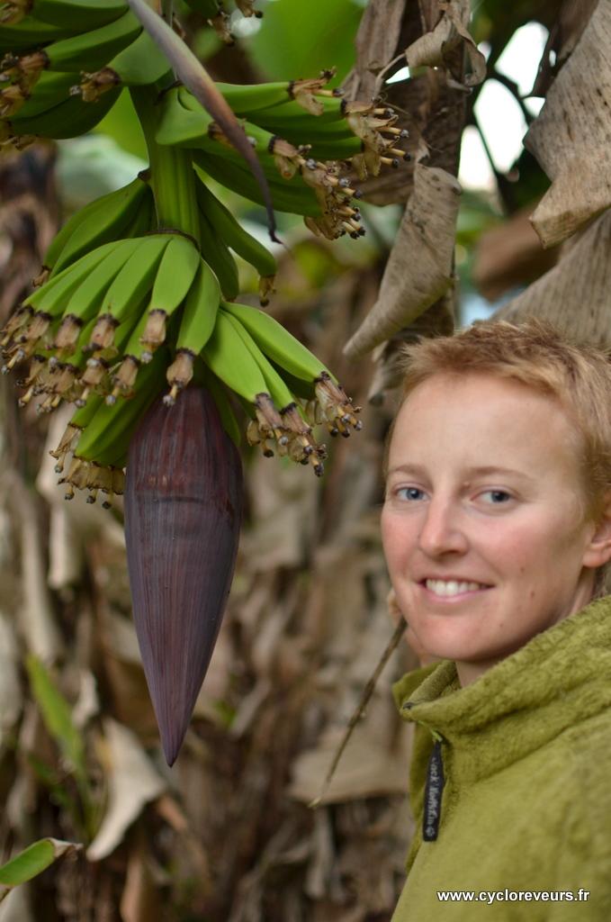 On est en pleine saison des bananes, on s'empiffre !!