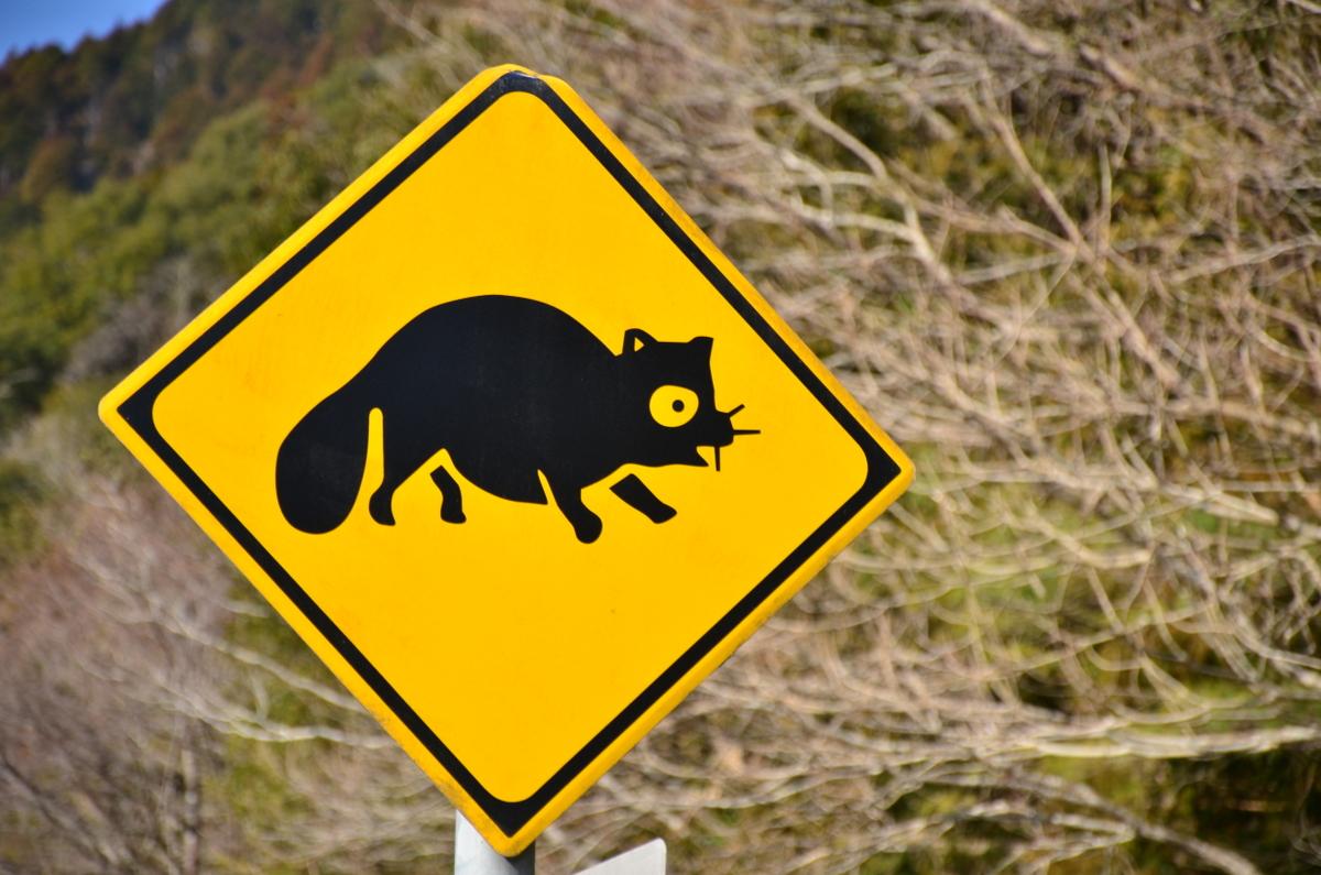 Le Japon cache d'étranges animaux !