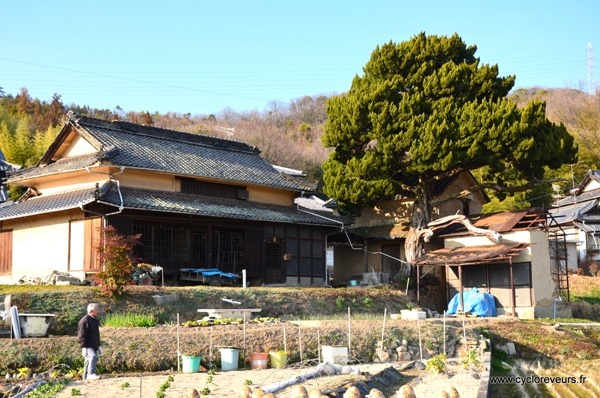 Maison tradi Japon