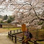 Dans le parc de Nara