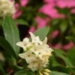Les fleurs nous enchantent de leurs couleurs et de leurs parfums !