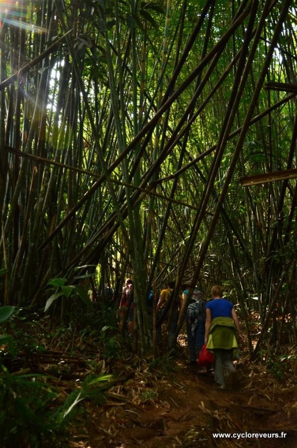 Trek dans la jungle - Gibbon experience - Huay Xay - Bokeo - Laos