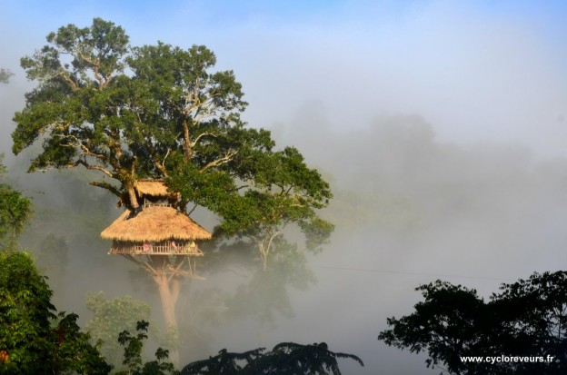 Maison dans les arbres - Gibbon experience - Huay Xay - Bokeo - Laos