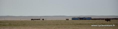 Détail du train et des chameaux