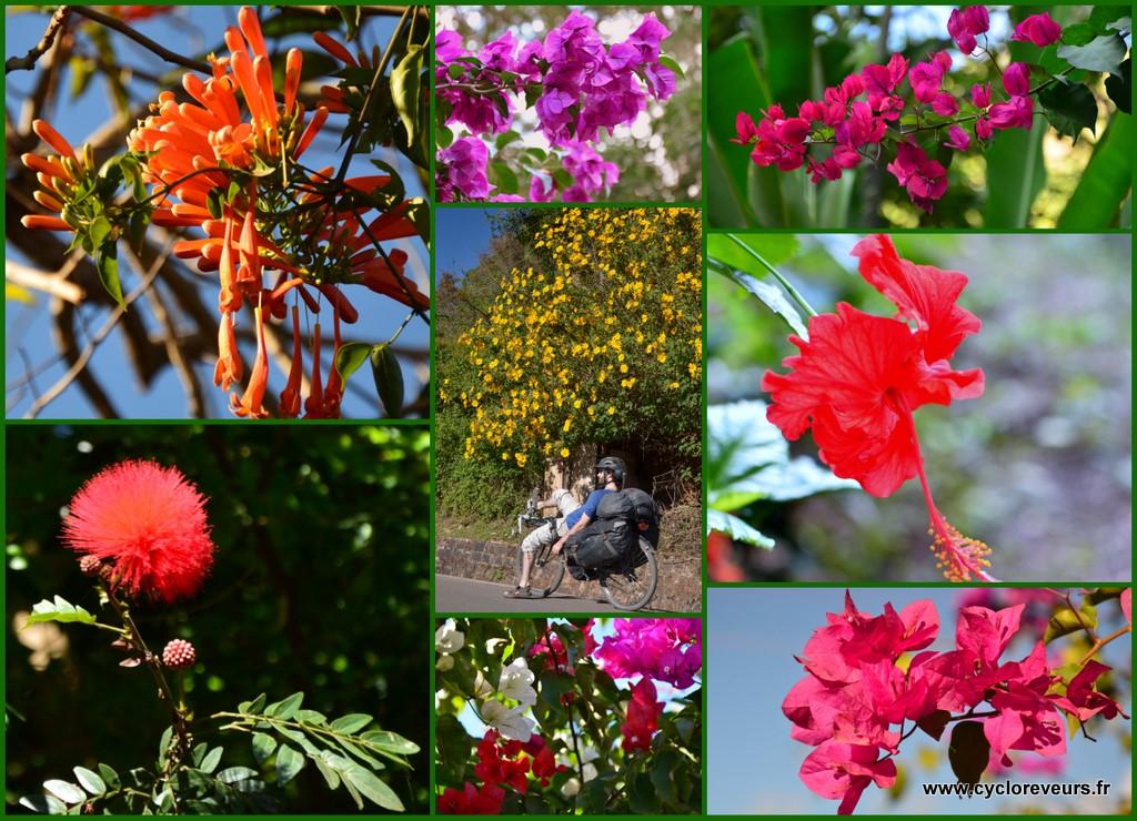 Comme certains l'ont déjà remarqué, les fleurs nous entourent dans la région !